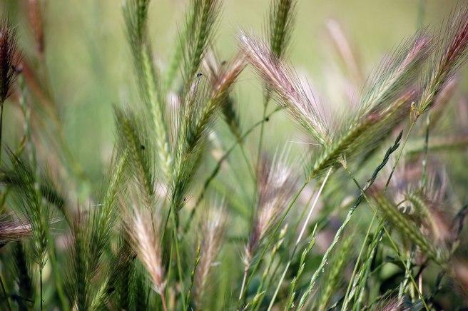 grass-spikes