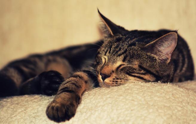 kitten-2874486_1920